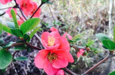 綺麗に咲いた赤い花