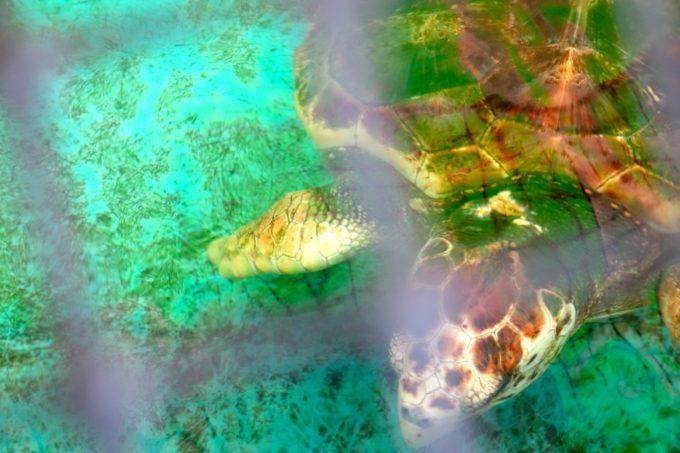 海水の中を優雅に泳ぐ亀