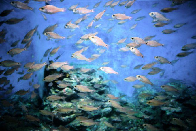水槽の中を所狭しと泳ぐ魚