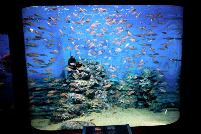 水槽いっぱいに泳ぐ小さな魚