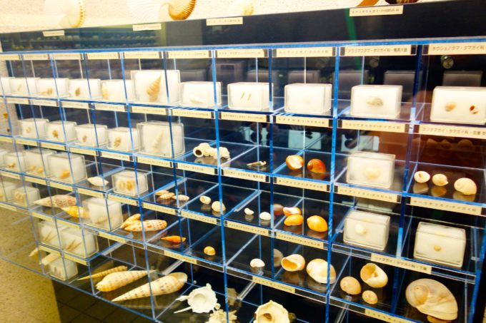 貝などの標本が並んだ展示室