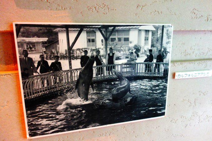 昭和28年頃の水族館の写真