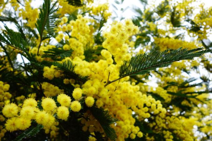黄色の花を咲かせた植物