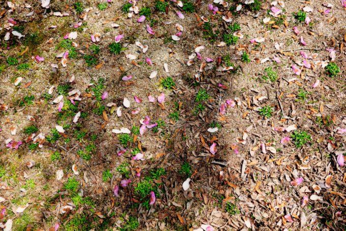 土の上に落ちた様々な種類の花びら