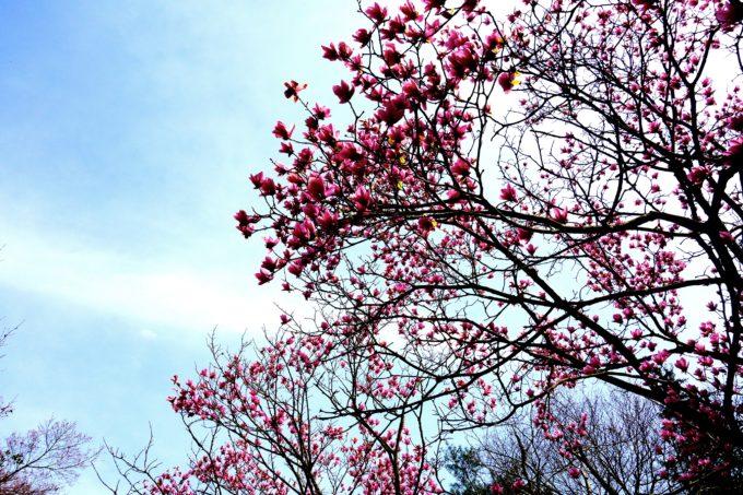 空と満開に咲いた赤色の花