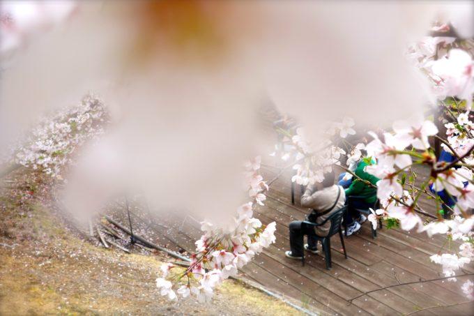 桜の木の間からウッドデッキの人々を撮影した様子