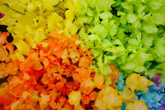 黄色、オレンジ、黄緑、青と様々な色のスイートピー