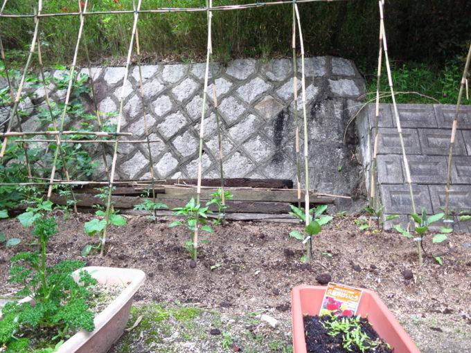 農園に設置した竹