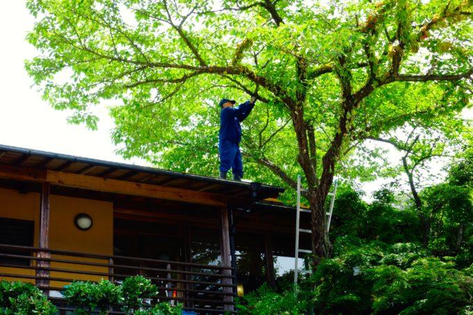 デイサービス楓の施設横の木を整備する男性