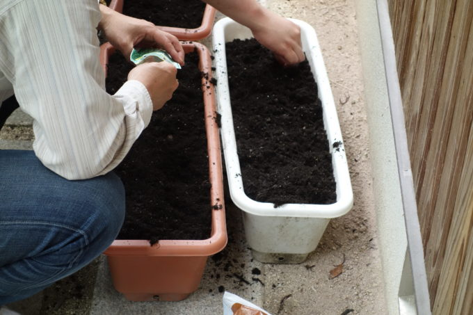土を入れたプランターに種を植える