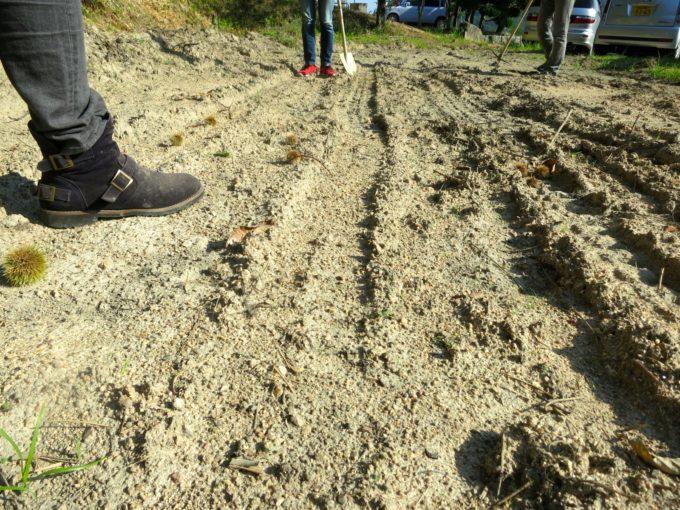 スコップを使いながら敷地を開墾する研修生