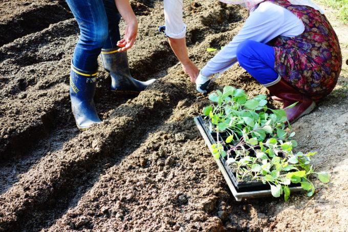苗の植え方をレクチャーする農園のスタッフ