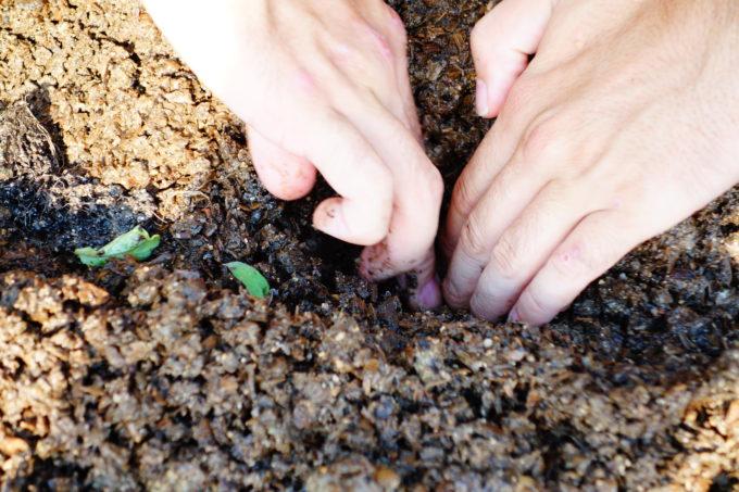 土の中に穴を掘る手先