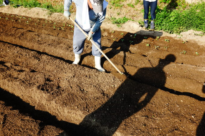耕し方を自ら鍬を持ち教える農園の社長