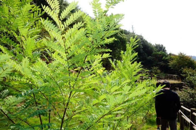 リトルプラス遊歩道に生えた樹々
