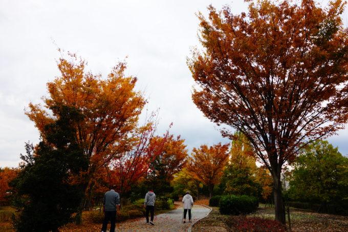 美しく紅葉した自然環境体験公園の樹々