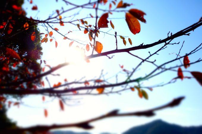 秋空と紅葉した樹々