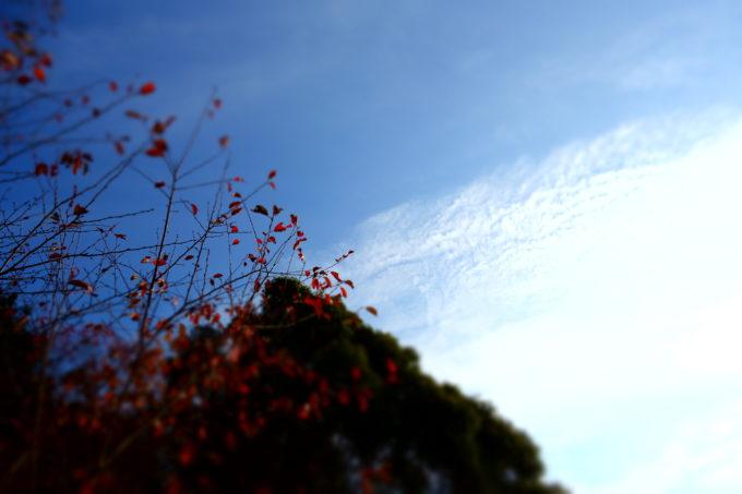 秋空を撮影した様子