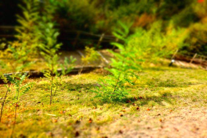 敷地内の芝生の様子