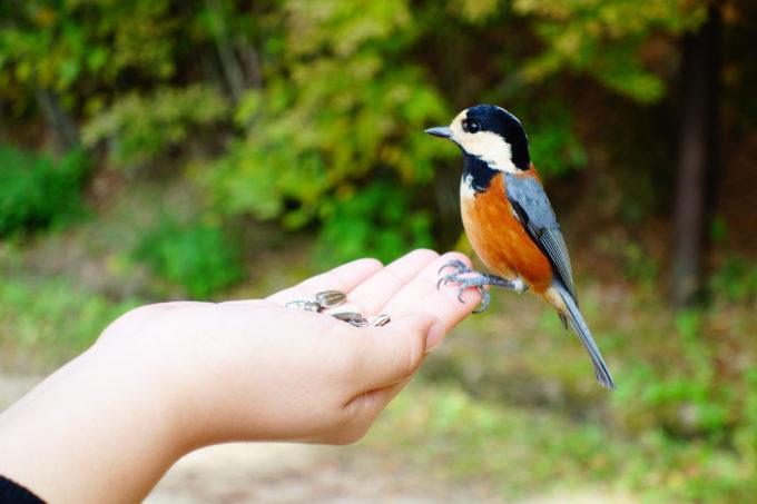 手に乗っている美しい野鳥