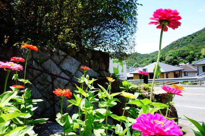 リトルプラスの外に咲いている花