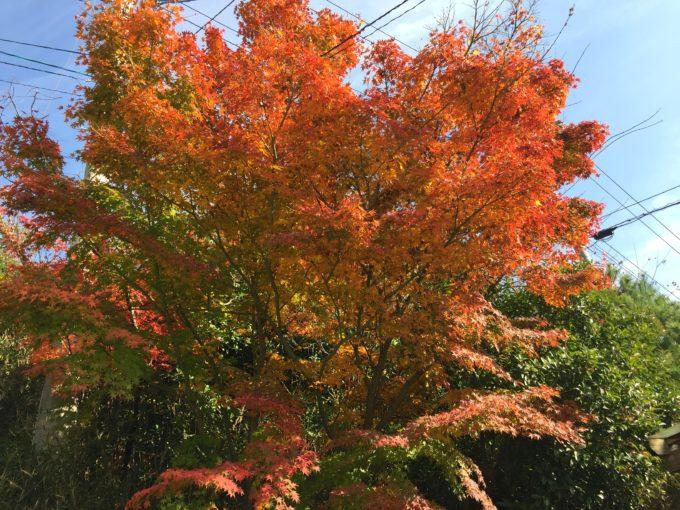 裏庭に育つ樹々