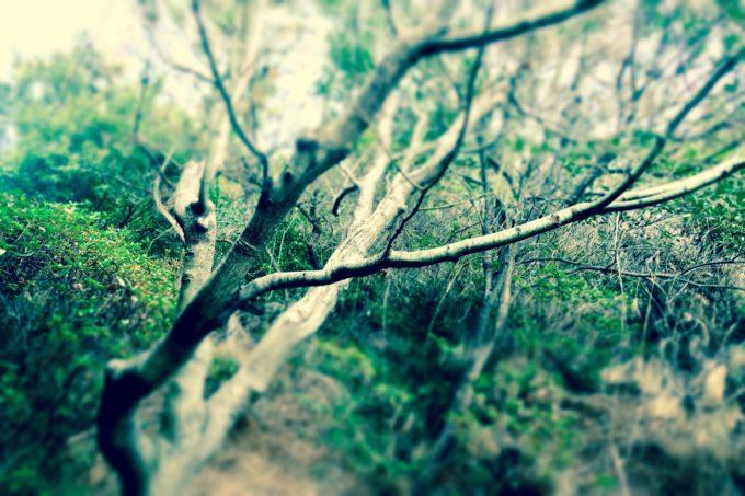 森の中を撮影した様子