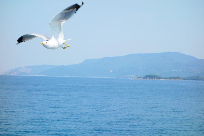 空を飛ぶカモメ