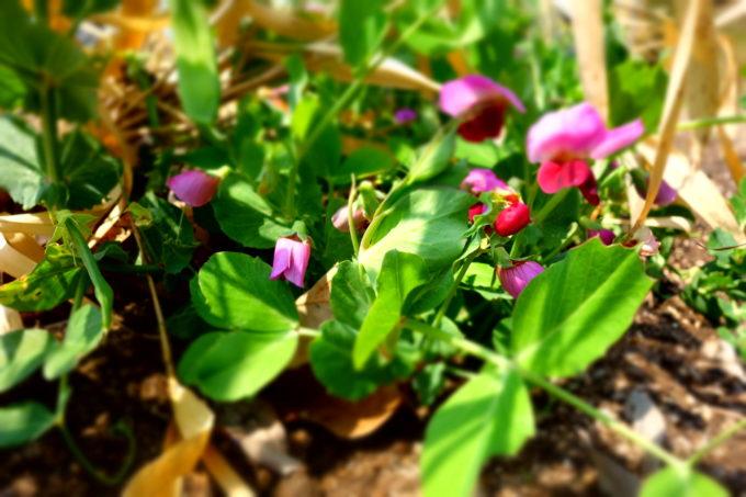 紫色の花を咲かせた植物