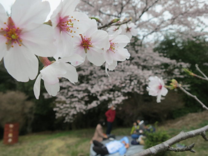 桜の木の下でくつろぐ人々