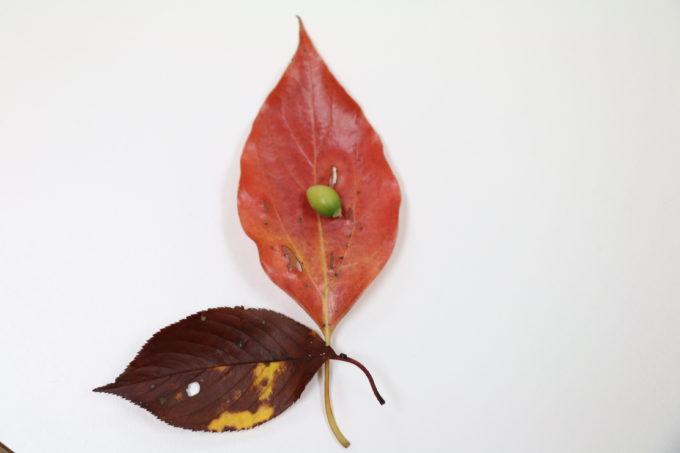 秋の恵と癒し@リトルプラス岡山