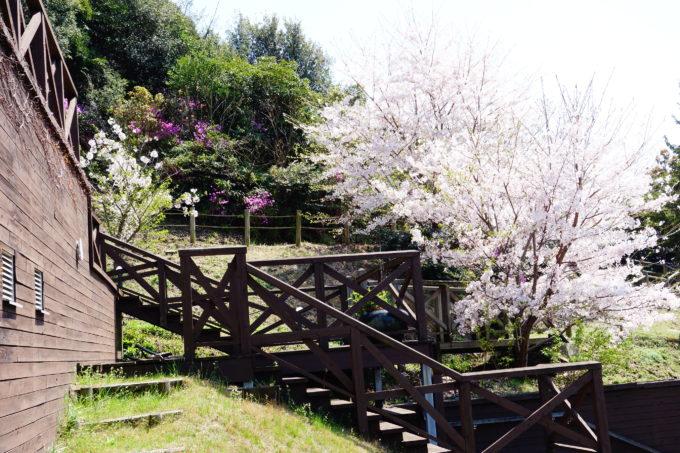 桜が満開のリワークリトルプラスの裏庭テラス