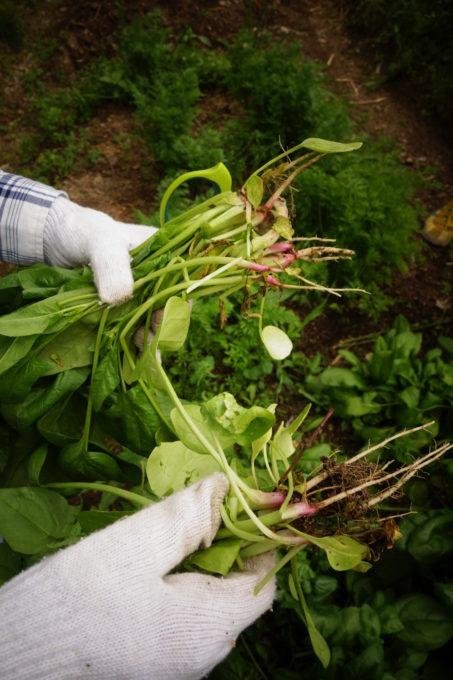 無農薬で収穫する喜び