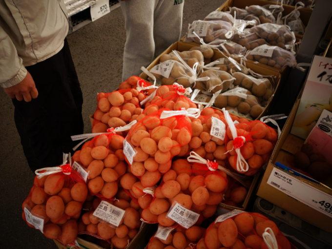 たくさんの種芋