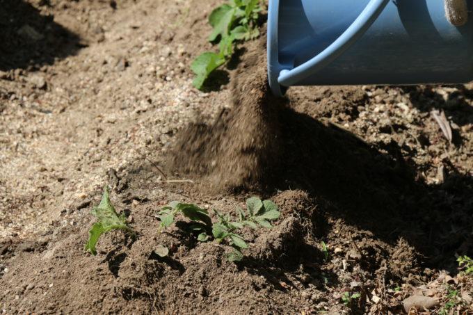バケツから土をまく