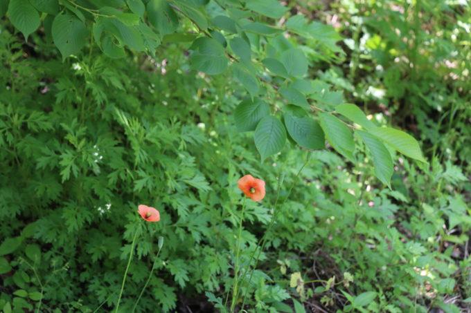 可憐に咲く2輪の花