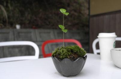 テーブルの上の植物