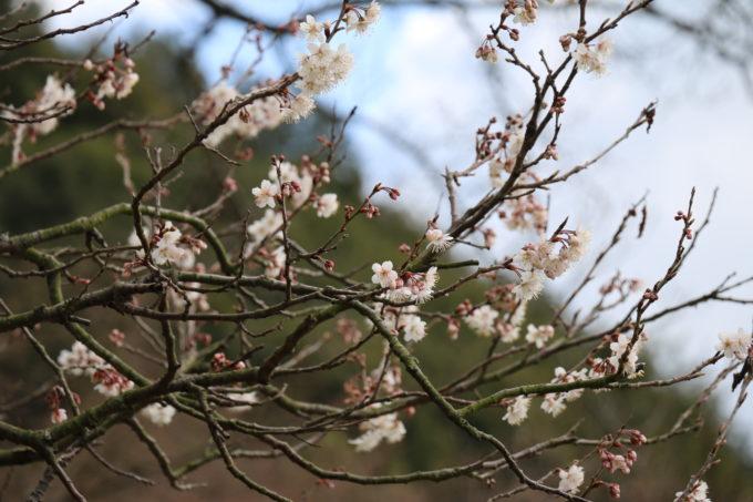 Little Plusのテラスから見える桜